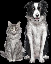 כלב חתול גוסבי