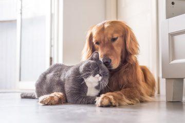 וגר חתול עם כלב